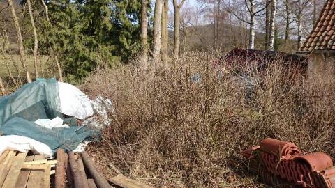 Projekt Heim Heckenschnitt15 (4)